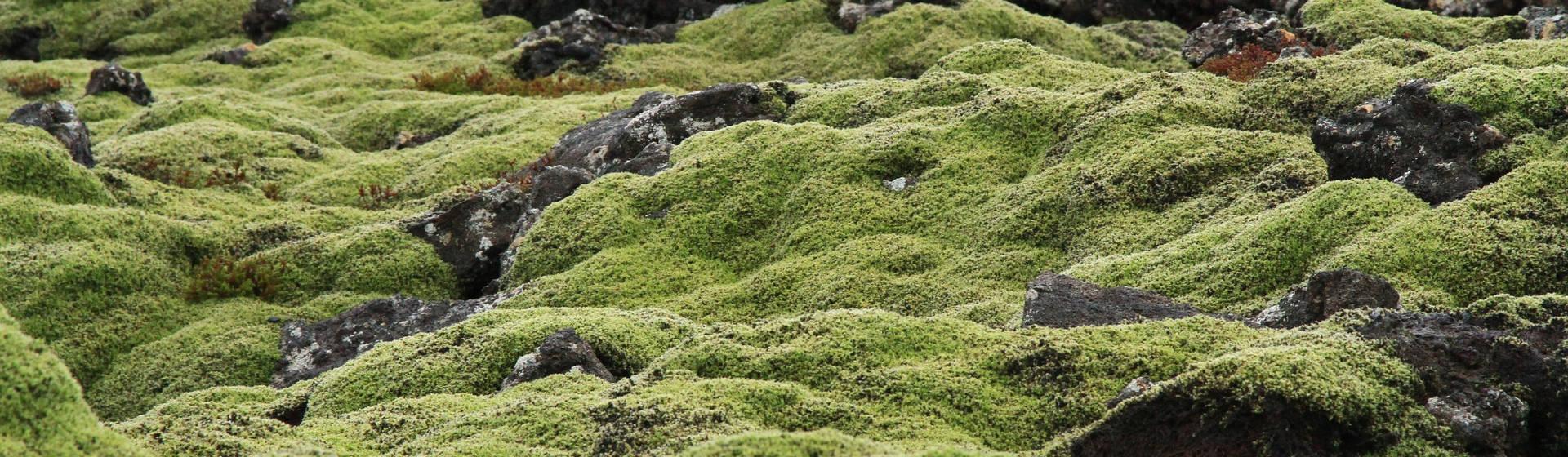 Travel Bucketlist: Iceland